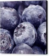 Blueberry Macro Canvas Print by Kitty Ellis