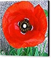 Bold Poppy Canvas Print
