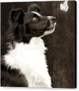 Border Collie Dog Watching Butterfly Canvas Print by Ethiriel  Photography