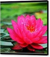 Bordered Water Lily Canvas Print