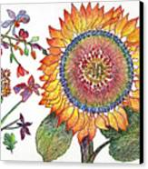 Botanical Flower-46 Sunflower Drawing Canvas Print