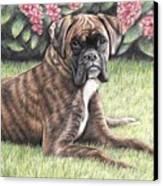 Boxer Girl Canvas Print
