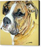 Boxer Canvas Print by Tanya Patey