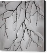 Branch Canvas Print by Gabriela Insuratelu