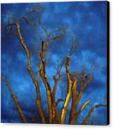 Branches Against Night Sky H Canvas Print