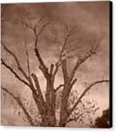 Branches Against Sepia Sky H   Canvas Print