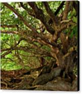 Branches And Roots Canvas Print by James Eddy