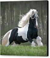 Breathtaking Stallion Canvas Print