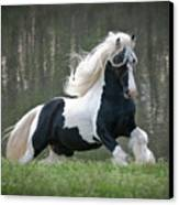 Breathtaking Stallion Canvas Print by Terry Kirkland Cook