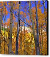 Brilliance Of Fall Canvas Print by Barbara Schultheis