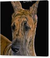 Brindle Great Dane Canvas Print by Larry Linton
