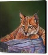 Brisa Canvas Print