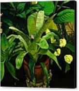 Bromeliad Canvas Print by Doug Strickland