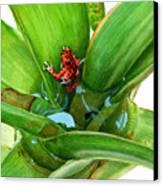 Bromeliad Microhabitat Canvas Print by Logan Parsons