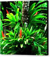 Bromeliads El Yunque National Forest Canvas Print