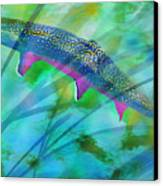 Brook Trout In The Stream Canvas Print by Terril Heilman
