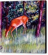 Brown County Deer Canvas Print