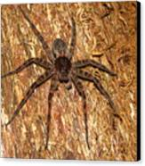 Brown Fishing Spider Canvas Print by Joshua Bales