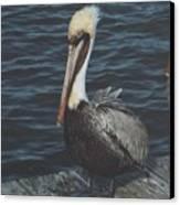 Brown Pelican On Pier Canvas Print