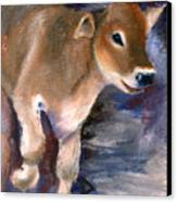 Brown Swiss Calf Aceo Canvas Print