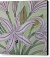 Brunsvigia Grandiflora Canvas Print