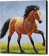 Buckskin Horse - Morning Run Canvas Print by Crista Forest