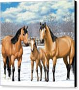 Buckskin Horses In Winter Pasture Canvas Print by Crista Forest