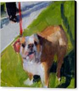 Buddy On A Red Leash Canvas Print
