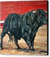 Bull Canvas Print by David McEwen
