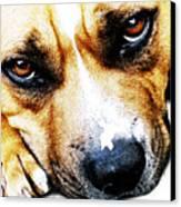 Bull Terrier Eyes Canvas Print by Michael Tompsett