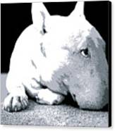 Bull Terrier White On Black Canvas Print by Michael Tompsett