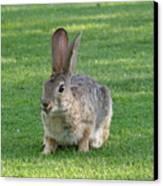 Bunny Canvas Print