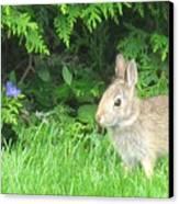 Bunny In Repose Canvas Print