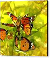 Butterflies Canvas Print by Ankeeta Bansal