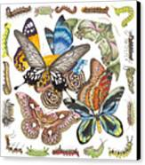 Butterflies Moths Caterpillars Canvas Print