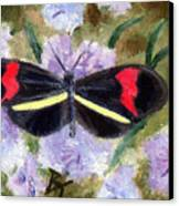 Butterfly Aceo Canvas Print