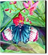 Butterfly Buffet Canvas Print by Mindy Newman