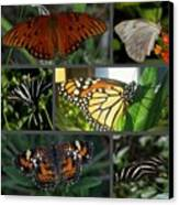 Butterfly Collage 2  Canvas Print by April Wietrecki Green