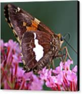 Butterfly-licking Canvas Print