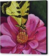 Butterfly On A Pink Daisy Canvas Print