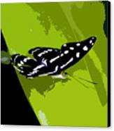 Butterfly On Green Canvas Print