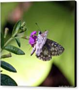 Butterfly On Heather Canvas Print