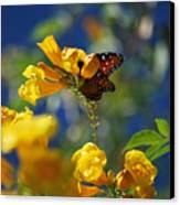 Butterfly Pollinating Flowers  Canvas Print by Donna Greene