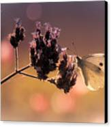 Butterfly Spirit #03 Canvas Print by Loriental Photography