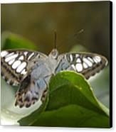 Butterfly Watching Canvas Print