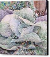 Cabbage Head Canvas Print