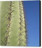 Cactus Side View Canvas Print