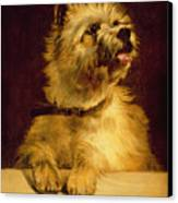 Cairn Terrier   Canvas Print by George Earl