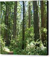 California Redwood Trees Forest Art Prints Canvas Print