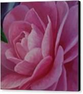 California Rose Canvas Print